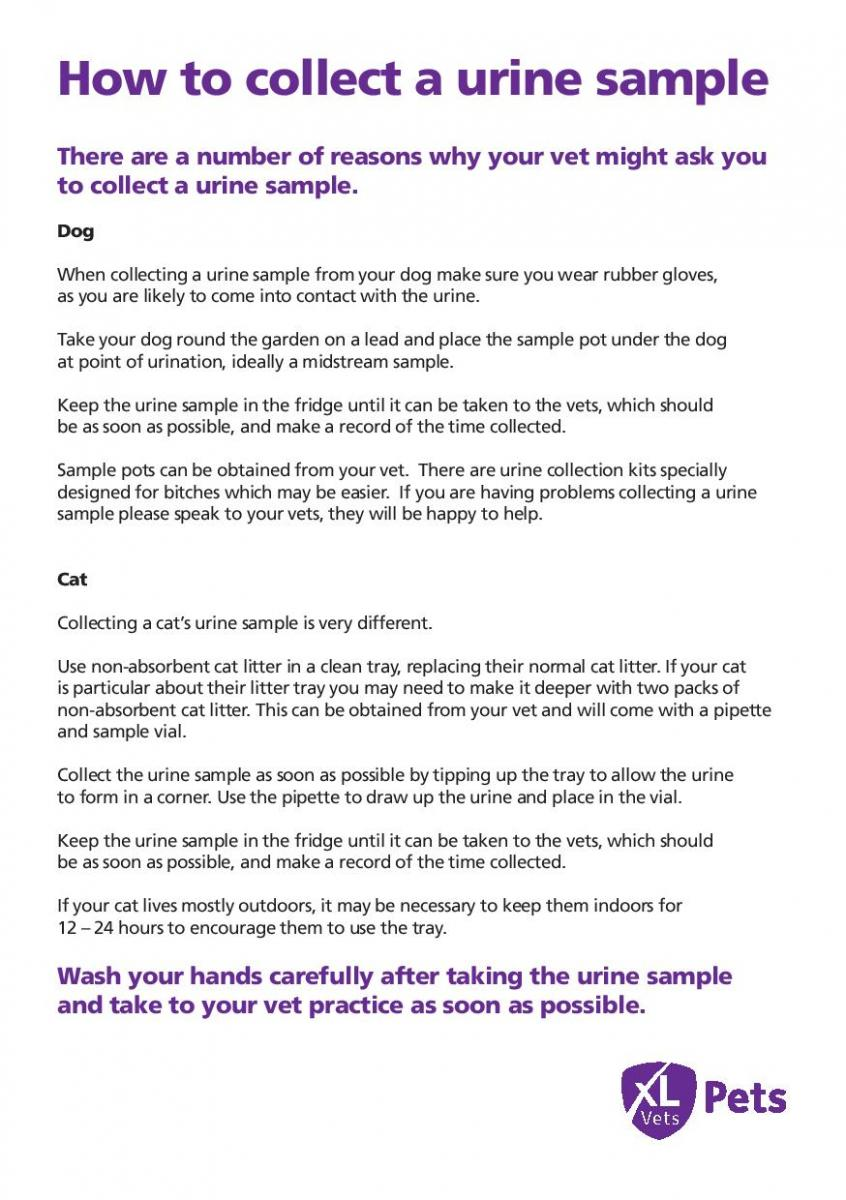 How to collect a urine sample
