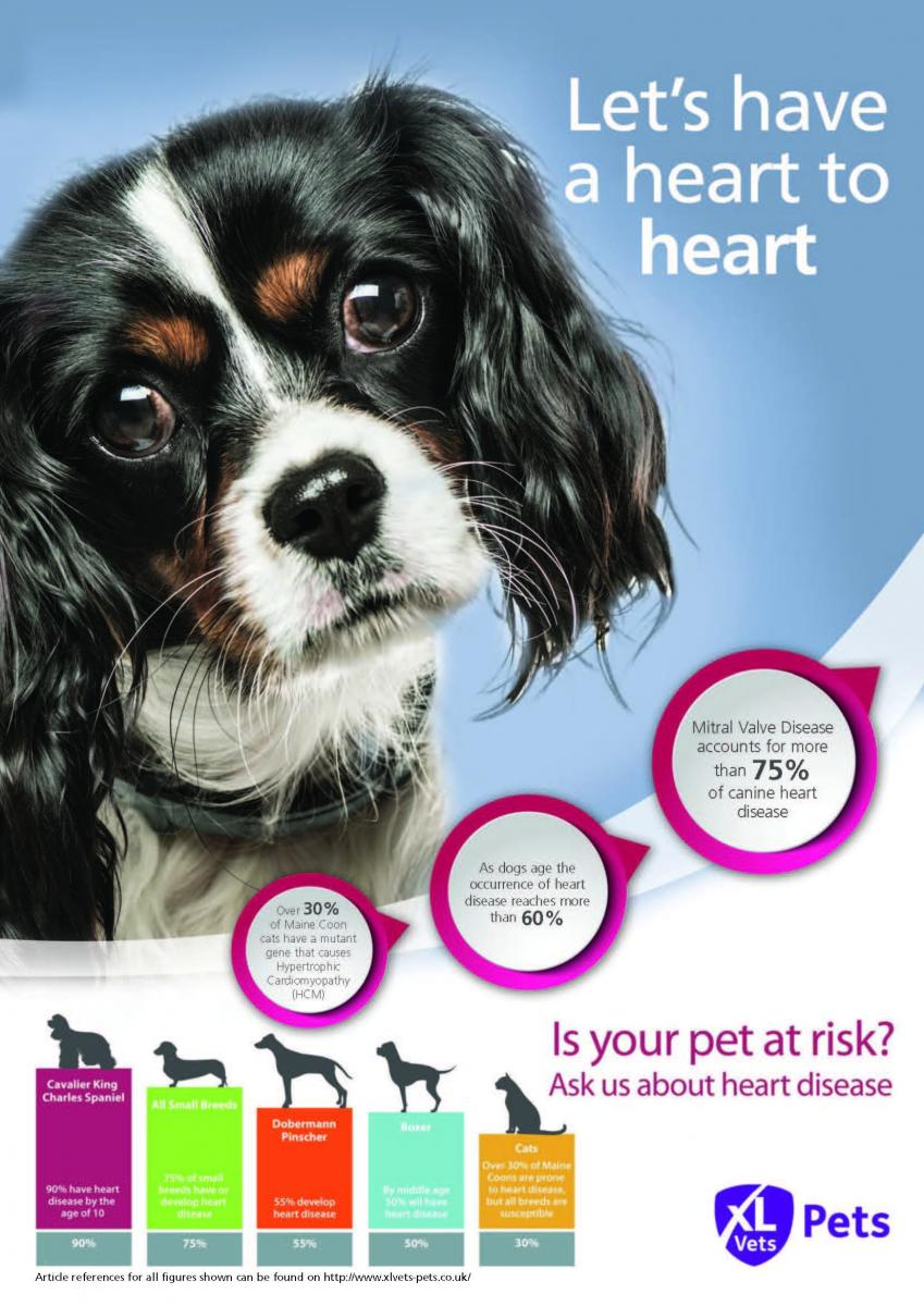 Targeting 'at risk' Pets Poster