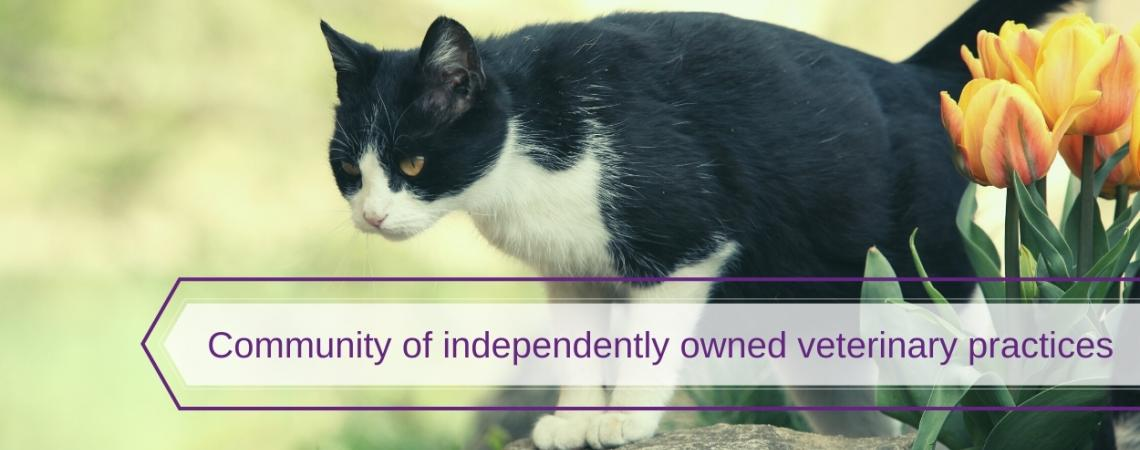Community of independently owned veterinary practices