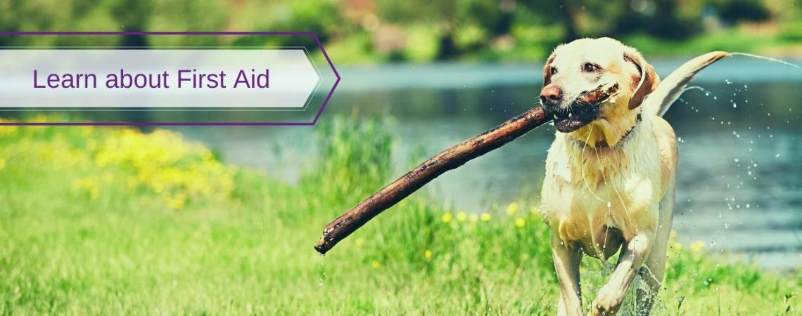 Learn about First Aid